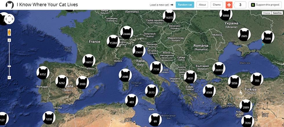 Tutti i gatti del mondo, in una mappa
