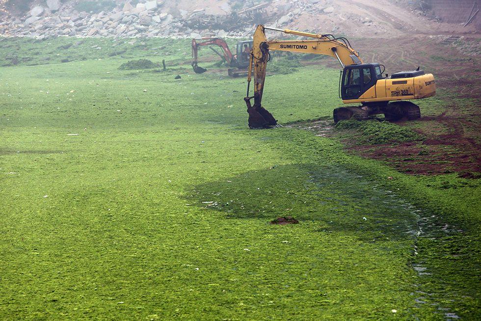Le coste della Cina invase dalle alghe