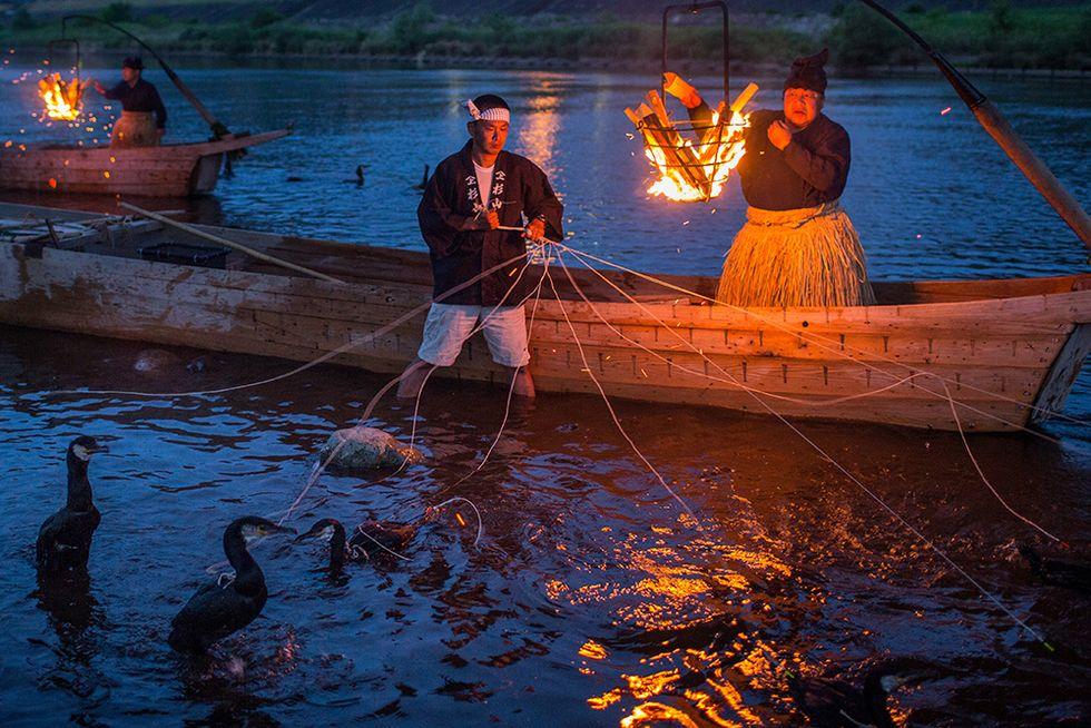 La pesca coi cormorani in Giappone