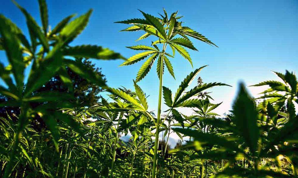 Legalizzare la cannabis, ecco la proposta bipartisan