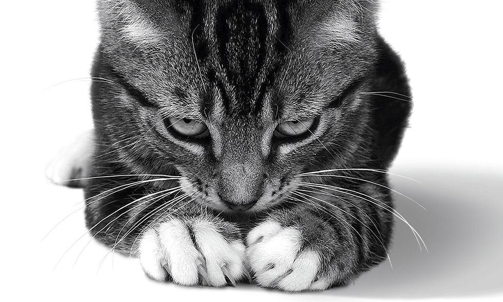 La vita emotiva dei gatti di Jeffrey Moussaieff Masson