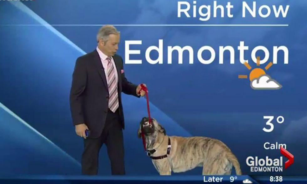 Previsioni meteo con il cane