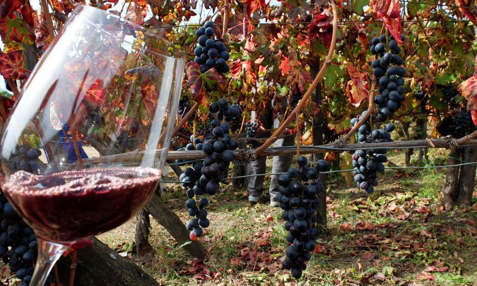 2018: produzione di vino in aumento (e di buona qualità)