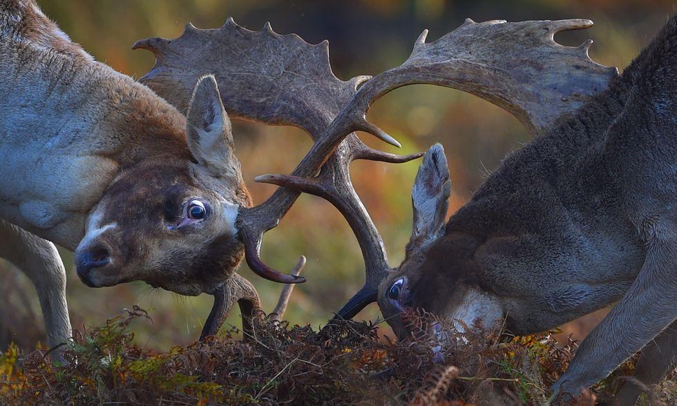 ANIMALI, le foto più belle della settimana - 16/22 ottobre