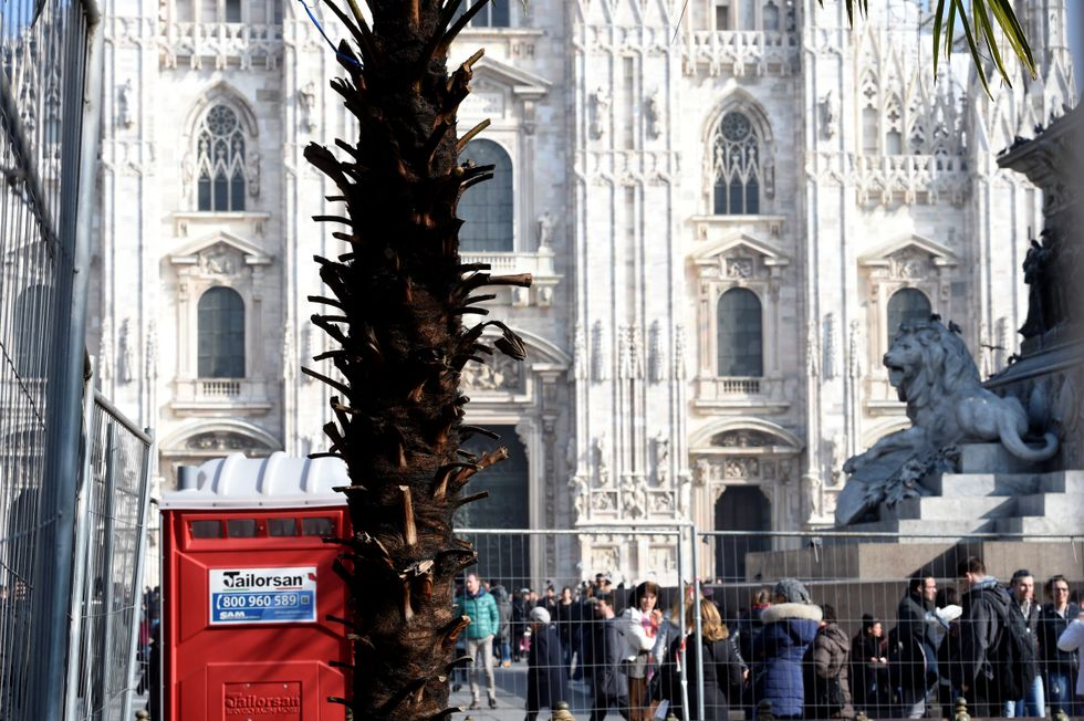 La palma bruciata dai vandali a Milano