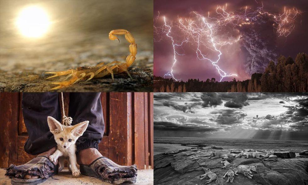 Wildlife Photographer of the Year 2014: le foto dei vincitori