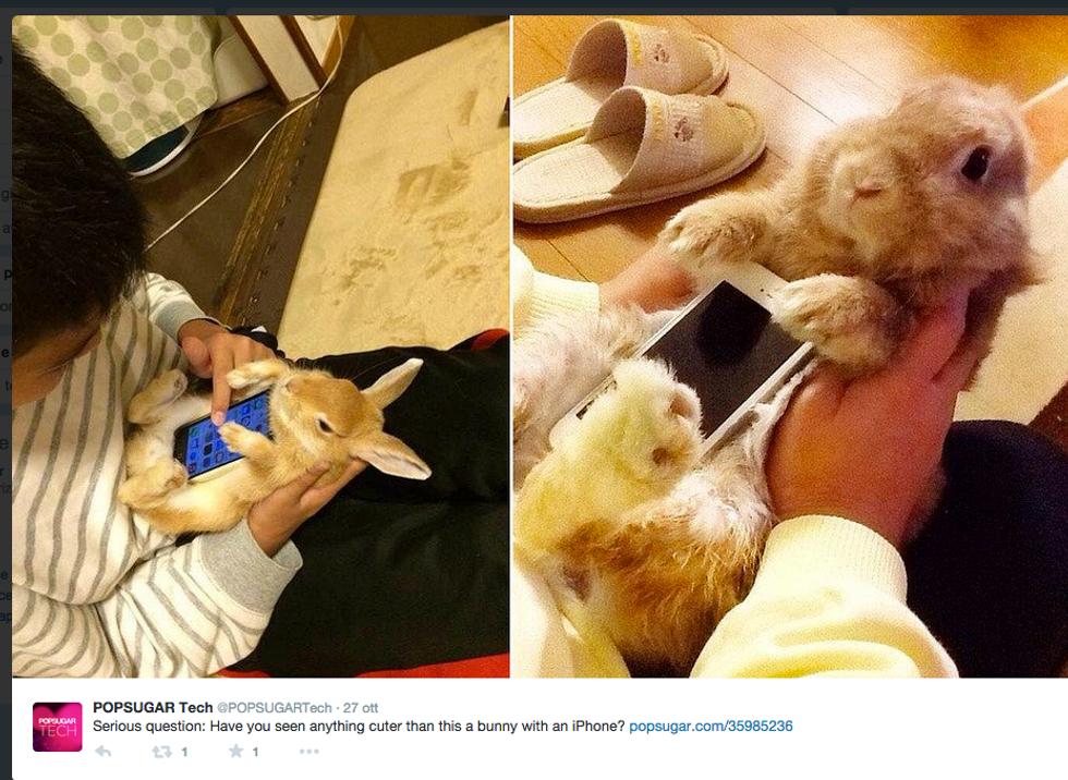 Conigli porta smartphone? Animalisti sul piede di guerra