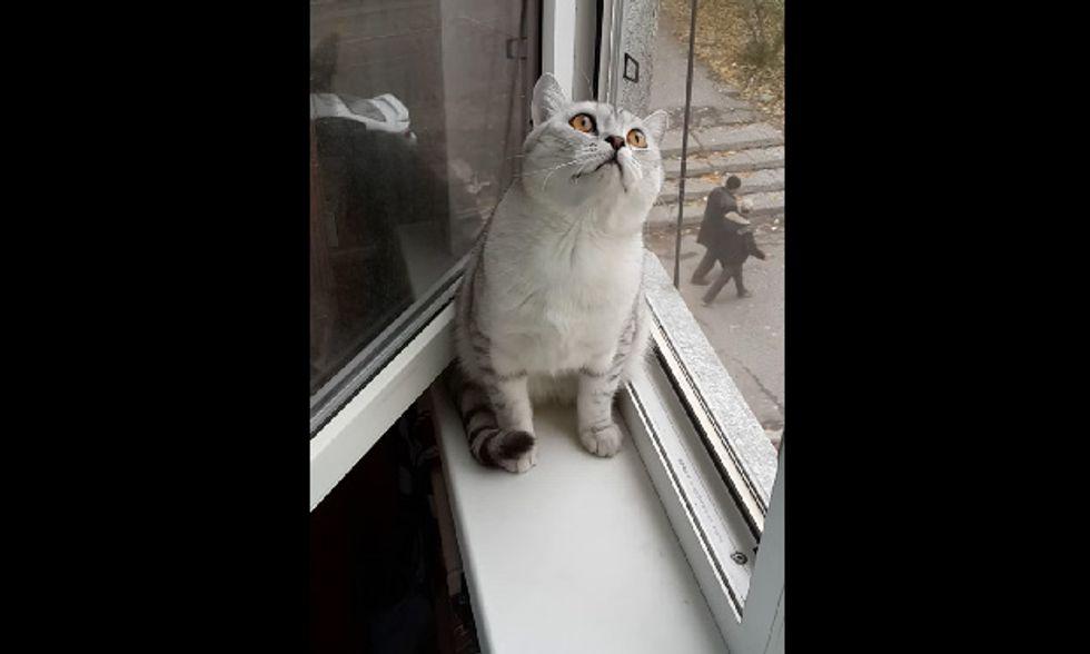 Il gatto (molto) concentrato