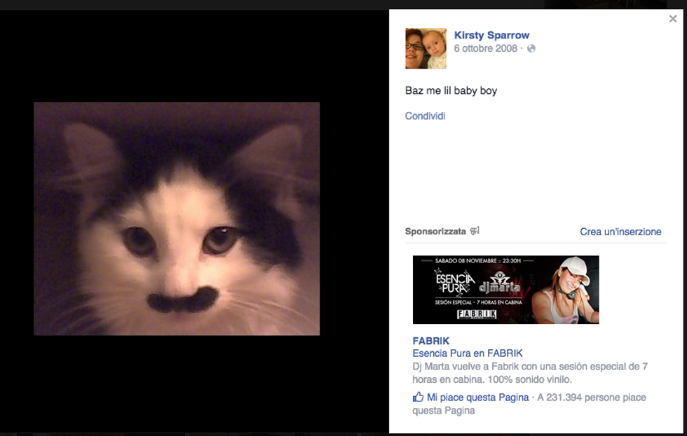 Baz, il gatto massacrato perché somiglia a Hitler