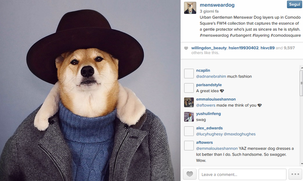 Bodhi, il cane-modello che spopola sul web