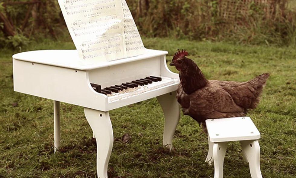 Silenzio, suona il pollo