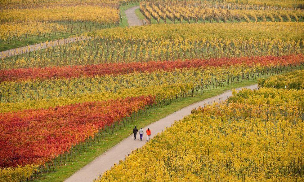 Il bello dell'autunno in 15 foto