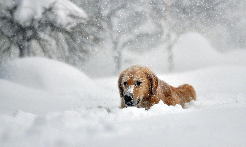 ANIMALI, le foto più belle della settimana - 20/26 novembre