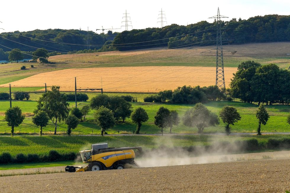 agricoltura-italia-aste-ribasso