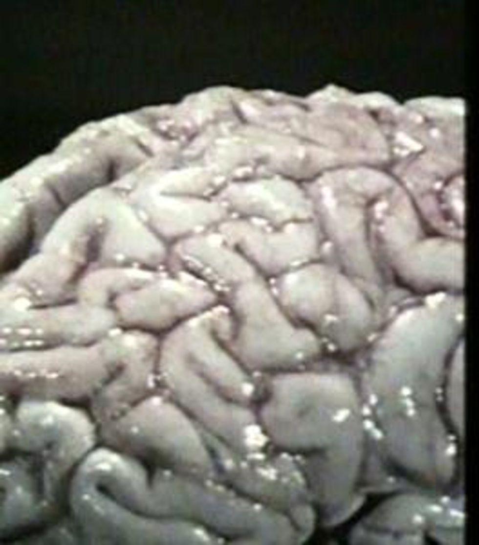 Ricerca: 100 cervelli rubati all'università del Texas