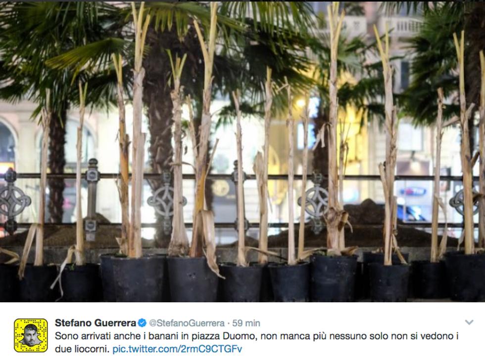 Dopo le palme i banani in piazza Duomo accendono i social