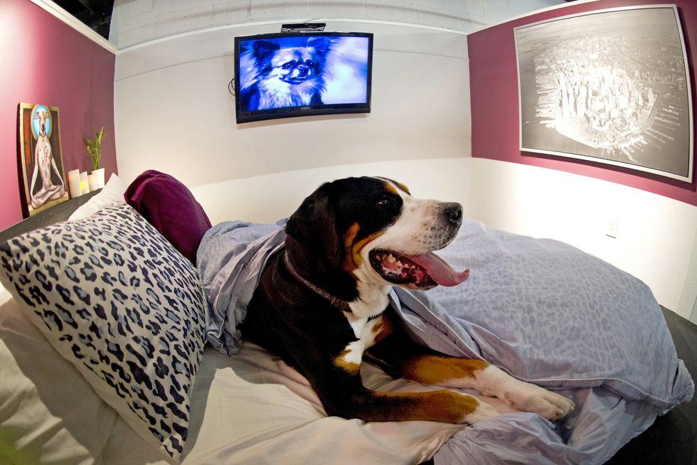 In hotel col cane? Ecco dove