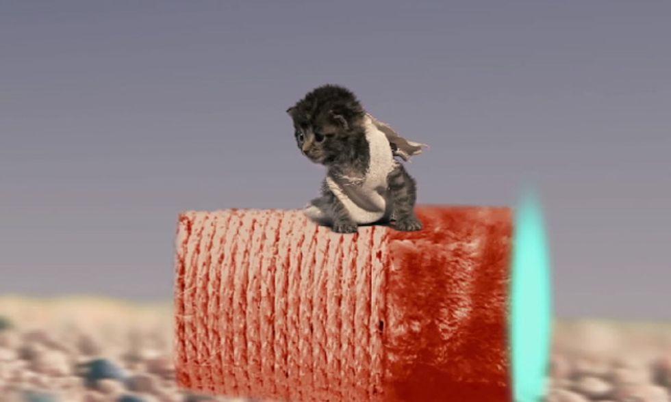 Star Wars VII, il trailer con i gattini