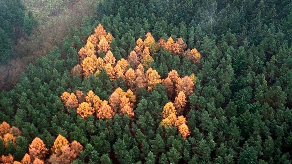 """Scoperto il """"bosco di Hitler"""""""