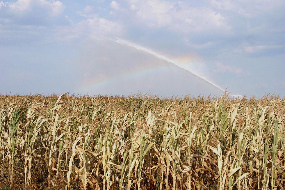 Siccità, a rischio tutto il settore agricolo