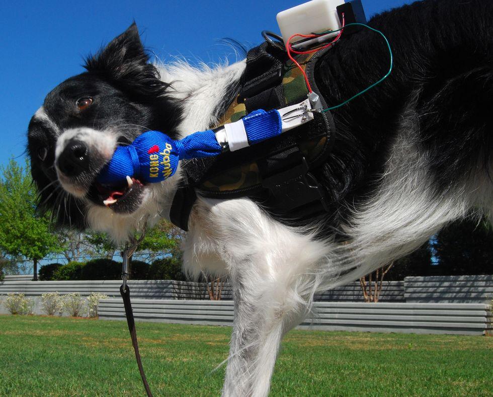 Ecco perché un giorno forse comprerai uno smartwatch al tuo cane