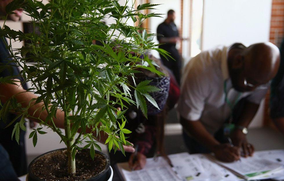 Stati Uniti, esplode il business della marijuana