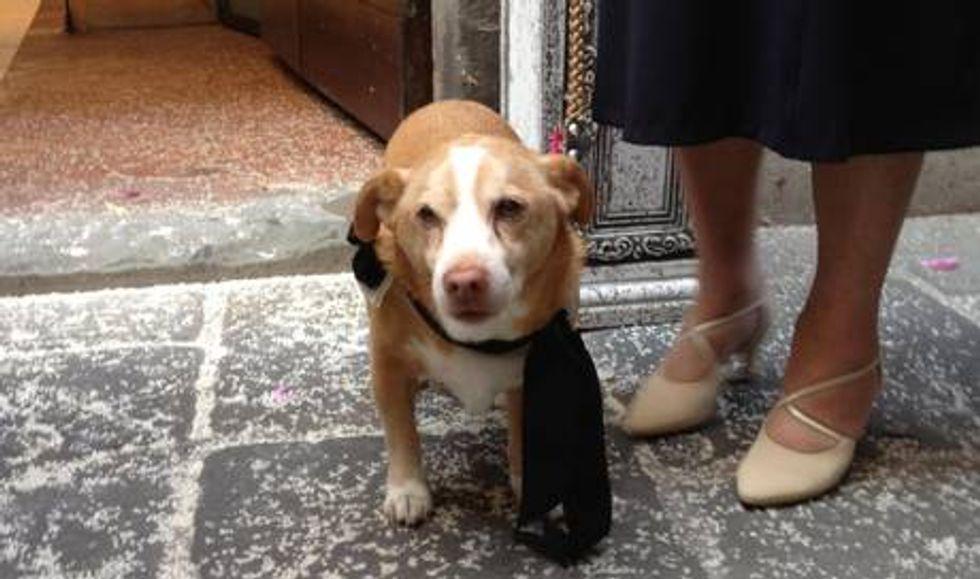 Nozze con gli animali. A Montecarlo (di Lucca) si può.