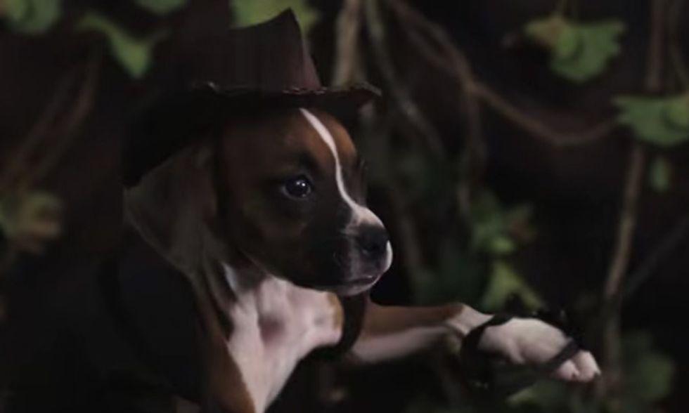 Indiana Jones, la parodia con un cucciolo di cane