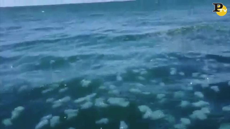 Invasione di meduse in Australia