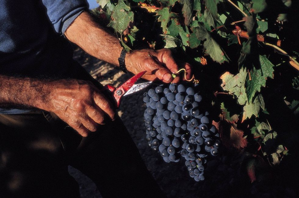 Stats and trends of Italian Wine industry