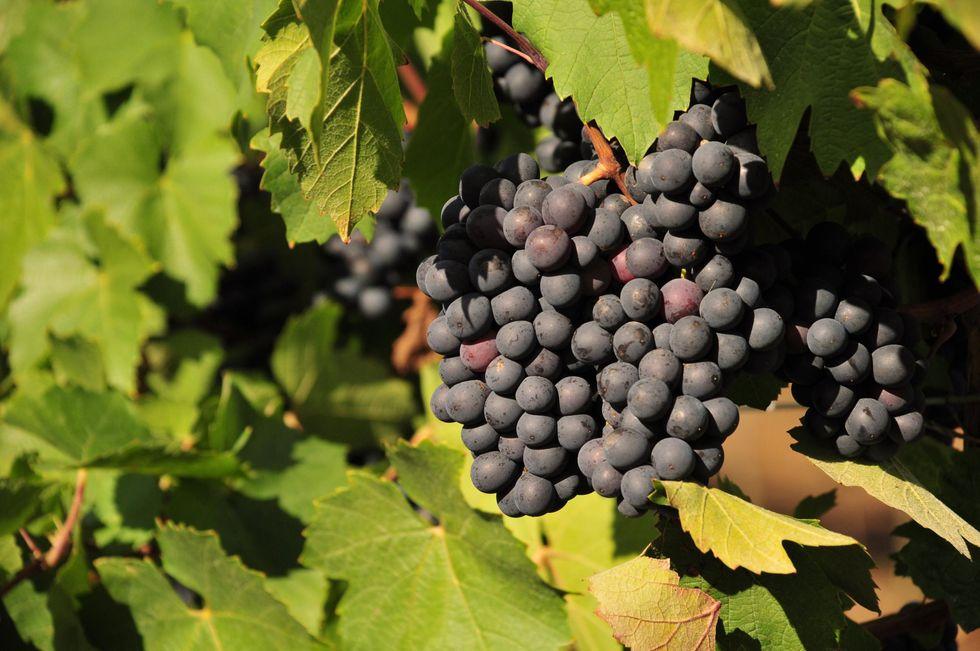 Italian wines at International Wine & Spirits Show, in China