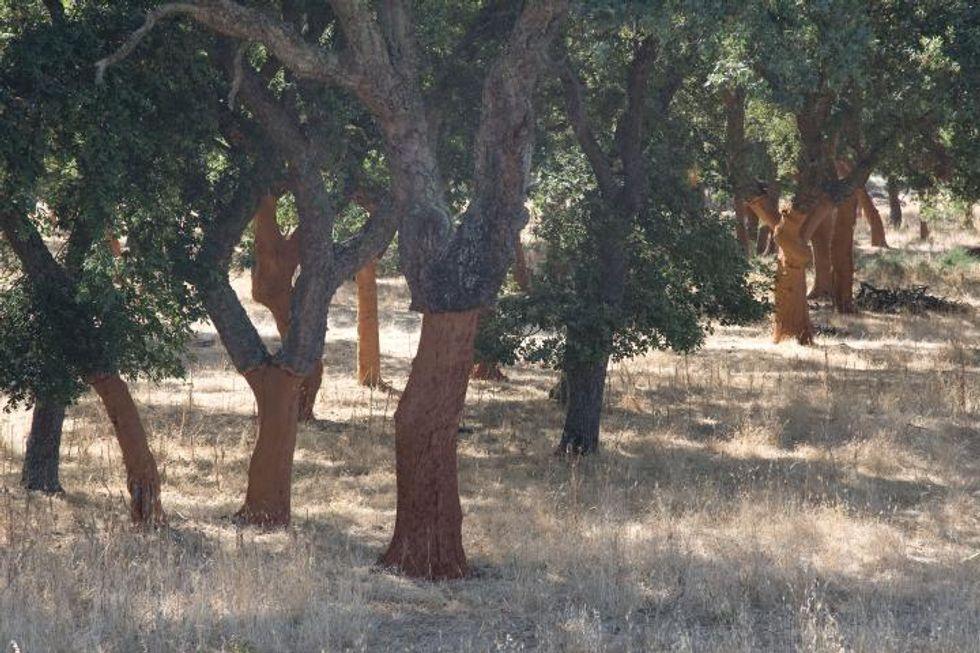Discovering Sardinia's cork craftwork tradition