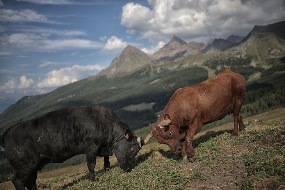 The secrets of Valle d'Aosta 's cuisine