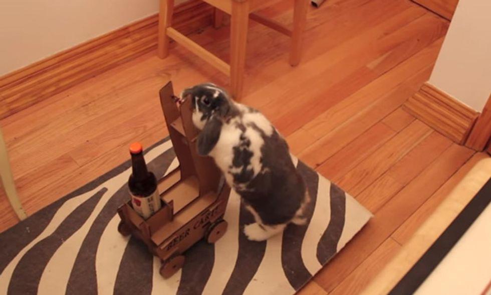 Gola secca? Il coniglio ti porta la birra