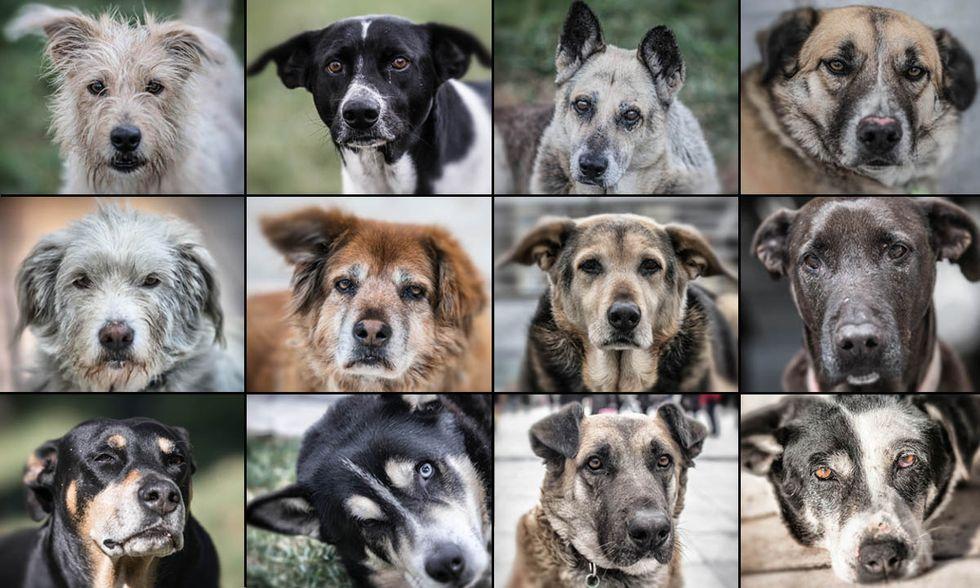 I cani randagi di Atene