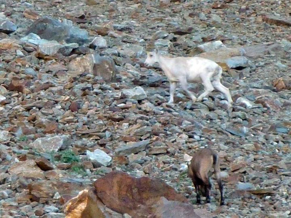 Discovering the Gran Paradiso National Park