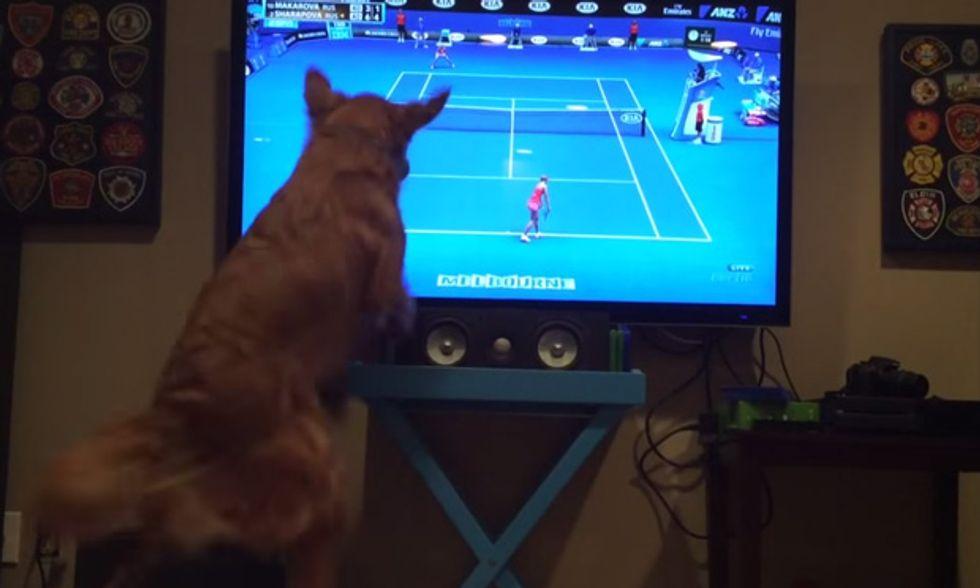 Australian Open di tennis, con cane