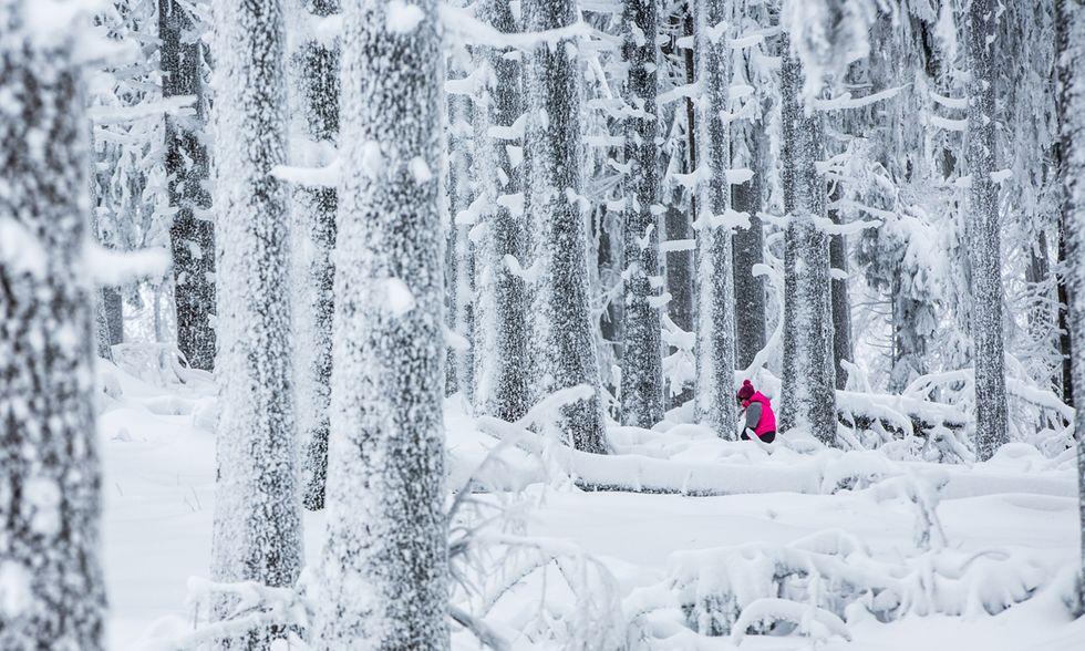 Le foto più belle dell'inverno
