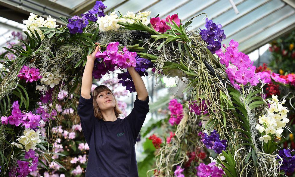 Londra, il fascino delle orchidee in mostra