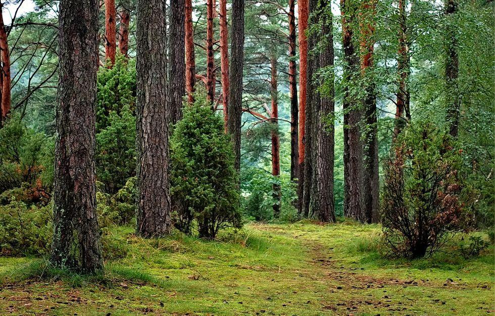Alberi sapienti antiche foreste, di Daniele Zovi