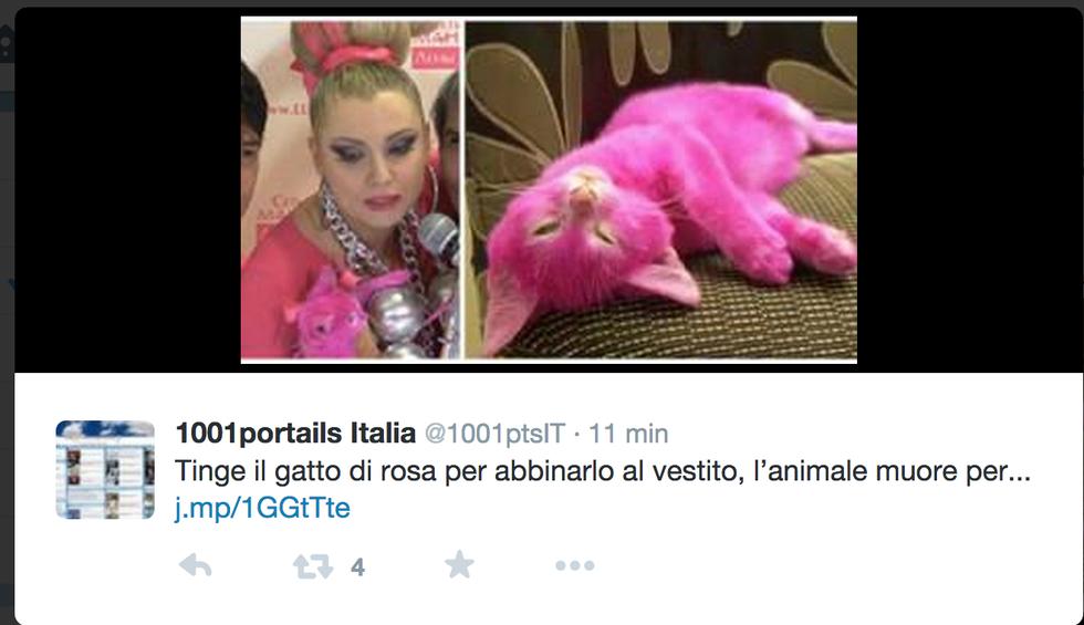 Morto il gatto rosa tinto per una festa
