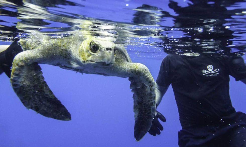 Sea-Shepherd-40-years-The-official-book-azione-tartarughe