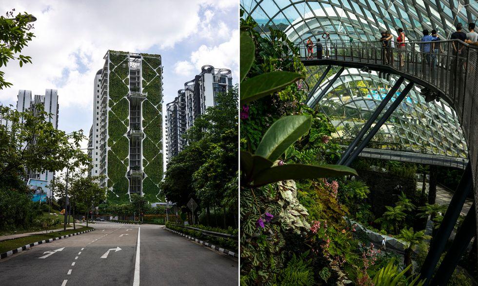 I giardini verticali di Singapore