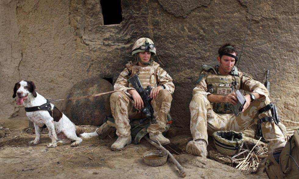 Cani alla guerra