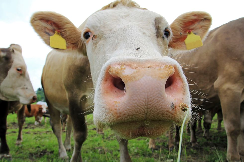 """Latte fieno: qualità e benefici di un """"super latte"""" di montagna"""