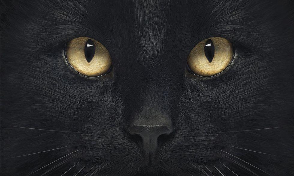 Il linguaggio segreto dei gatti di Susanne Schötz
