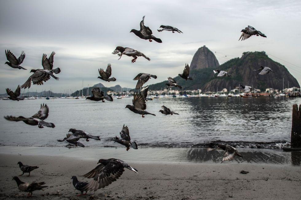 Rio 2016: la baia dei rifiuti