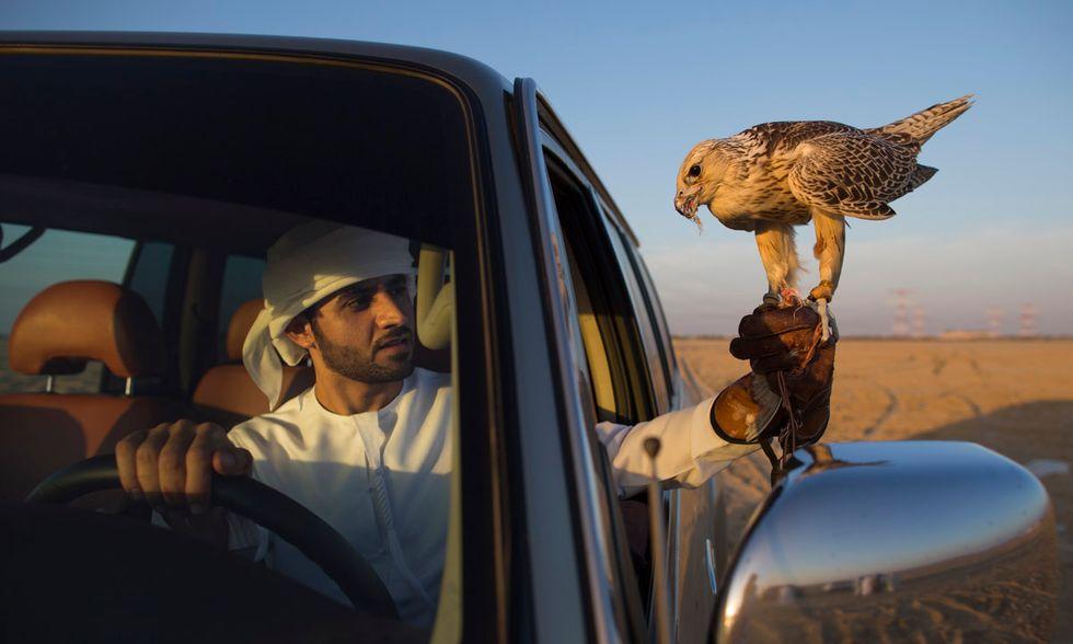 La falconeria negli Emirati Arabi
