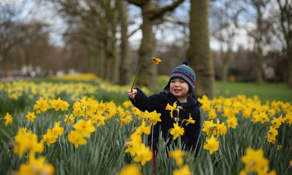 La primavera nei parchi di Londra