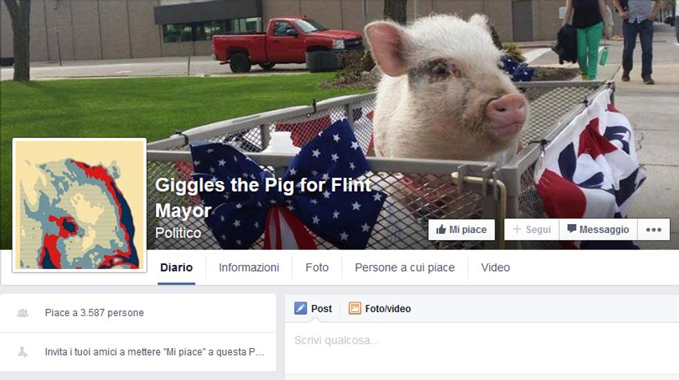 Giggles the Pig, la maialina candidata sindaco